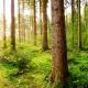 Umweltgedanke | News | Massivholzleisten | Reese Kehlleisten | Lemgo