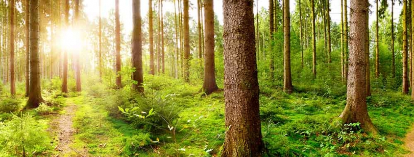 Umweltgedanke   News   Massivholzleisten   Reese Kehlleisten   Lemgo